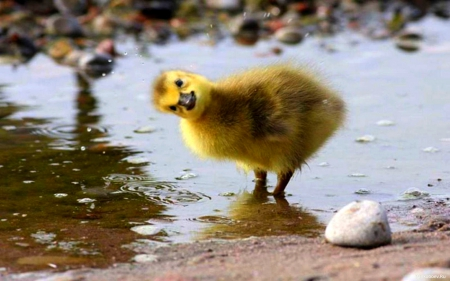 Want to be the Jaybird trainee?  Duckling